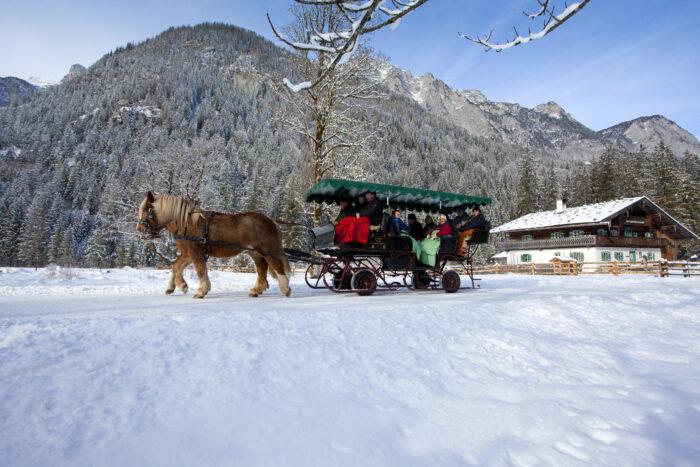 Horse-drawn carriage & sleigh rides